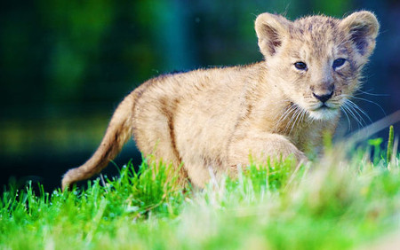 Dublin Zoo discounted online tickets!