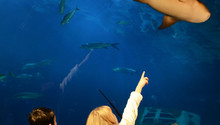 Aquarium Birthday Parties