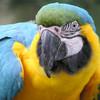 >Birdland