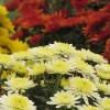 >Glebe Garden Centre