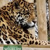 >Wingham Wildlife Park